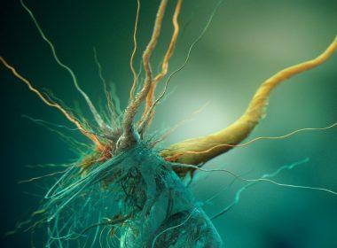 Científicos han «despertado» microbios atrapados en el fondo marino por 100 millones de años