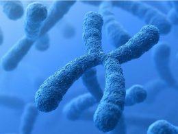 Científicos secuencian completamente un cromosoma humano por primera vez