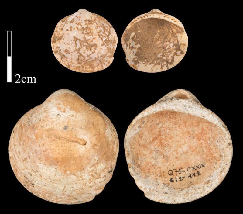 El collar de 120.000 años de antigüedad que revela el origen de la cuerda