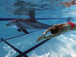 Crean un delfín robot que se ve demasiado real
