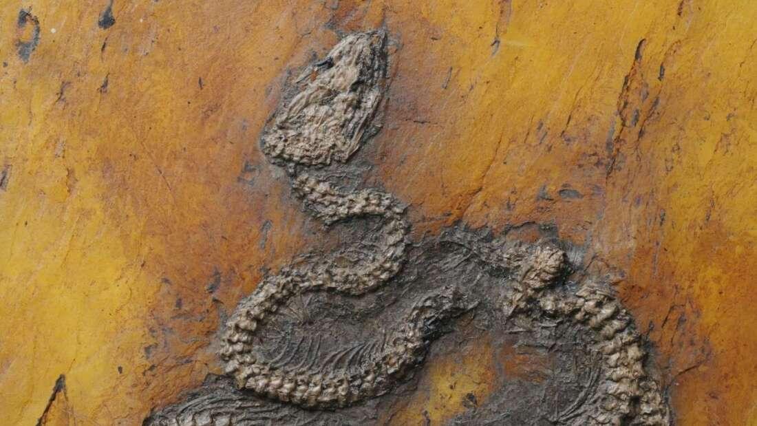 Descubren el fósil de pitón más antiguo del mundo en Europa