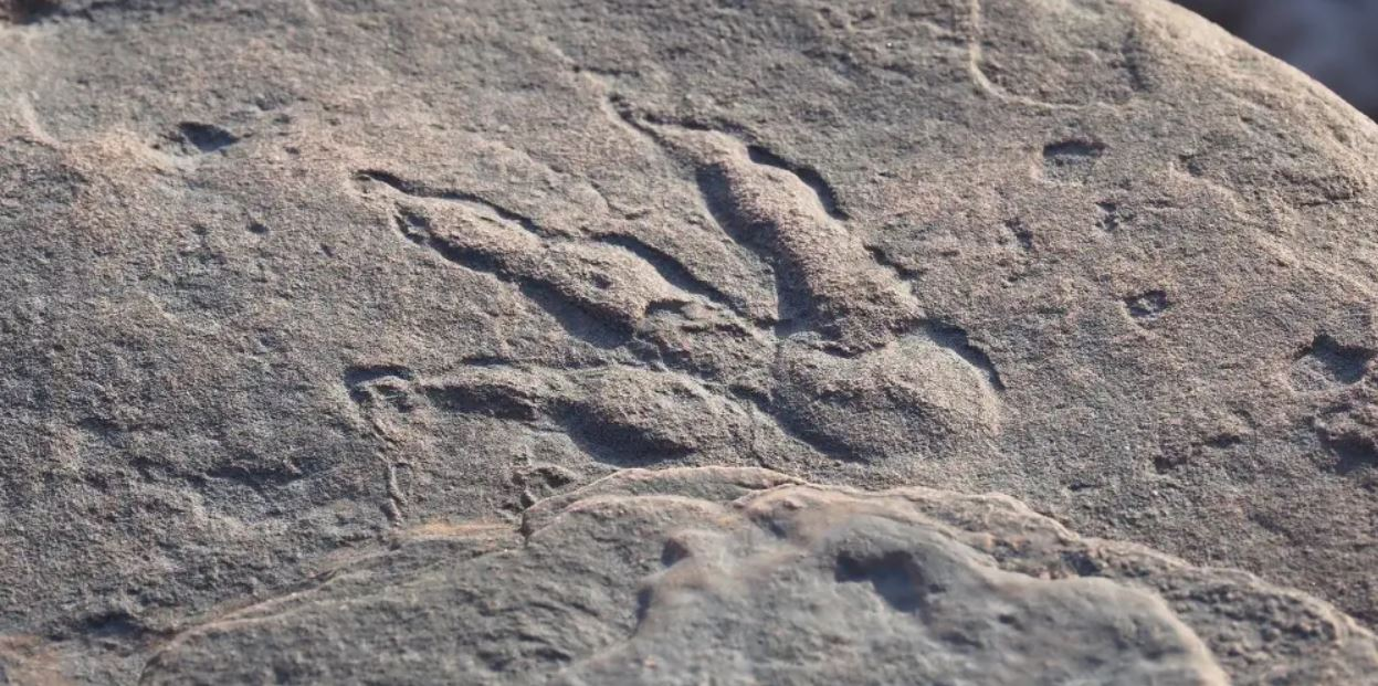 Huella de dinosaurio de 220 millones de años es hallada por niña de 4 años